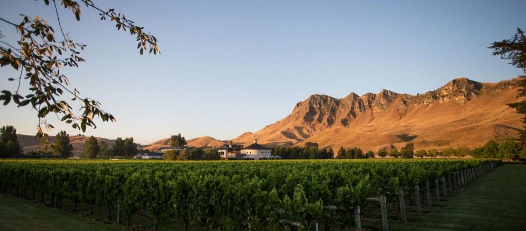 View of the Craggy Range Winery vineyard.
