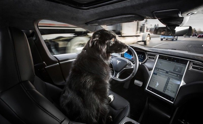 Dog at the wheel of an autonomous car.