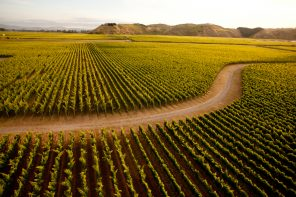A road winds through a vineyard in the Hawkes Bay sunset