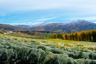 Overlooking the Mt Difficulty vineyard in Cromwell, Central Otago