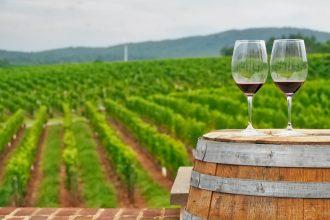 Auckland's Wine Regions