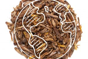 Eat Crawlers' World Edible Insect Day image