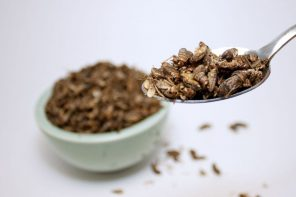 Calls for research into edible insects