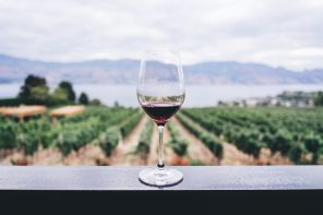 A glass of red wine with the view of the vineyard on the background