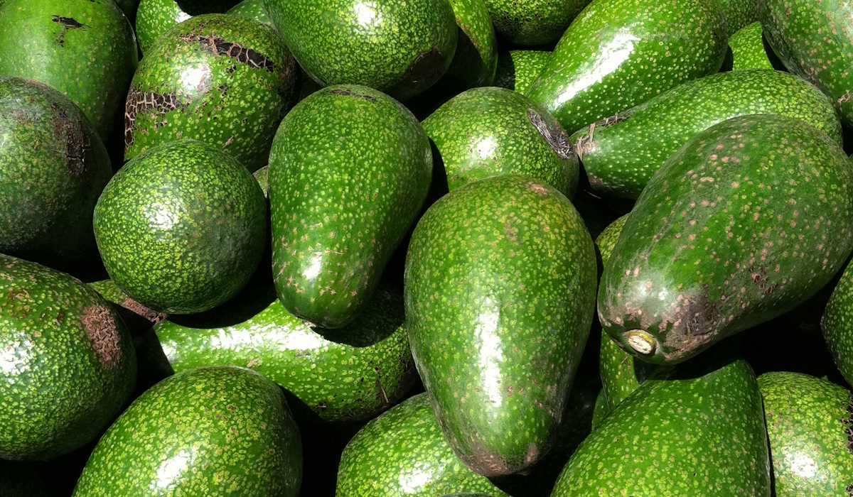 More Thieves Stealing Avocados Supermarket News
