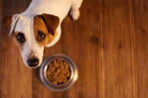 STUDY FINDS PET FOODS LINKED TO HEART DISEASE