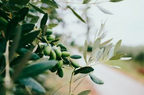 NZ Olive Oil Makers Win Big