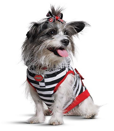 Gwen Stefani launched her Harajuku Lovers clothing line for pets in collaboration with Petco.