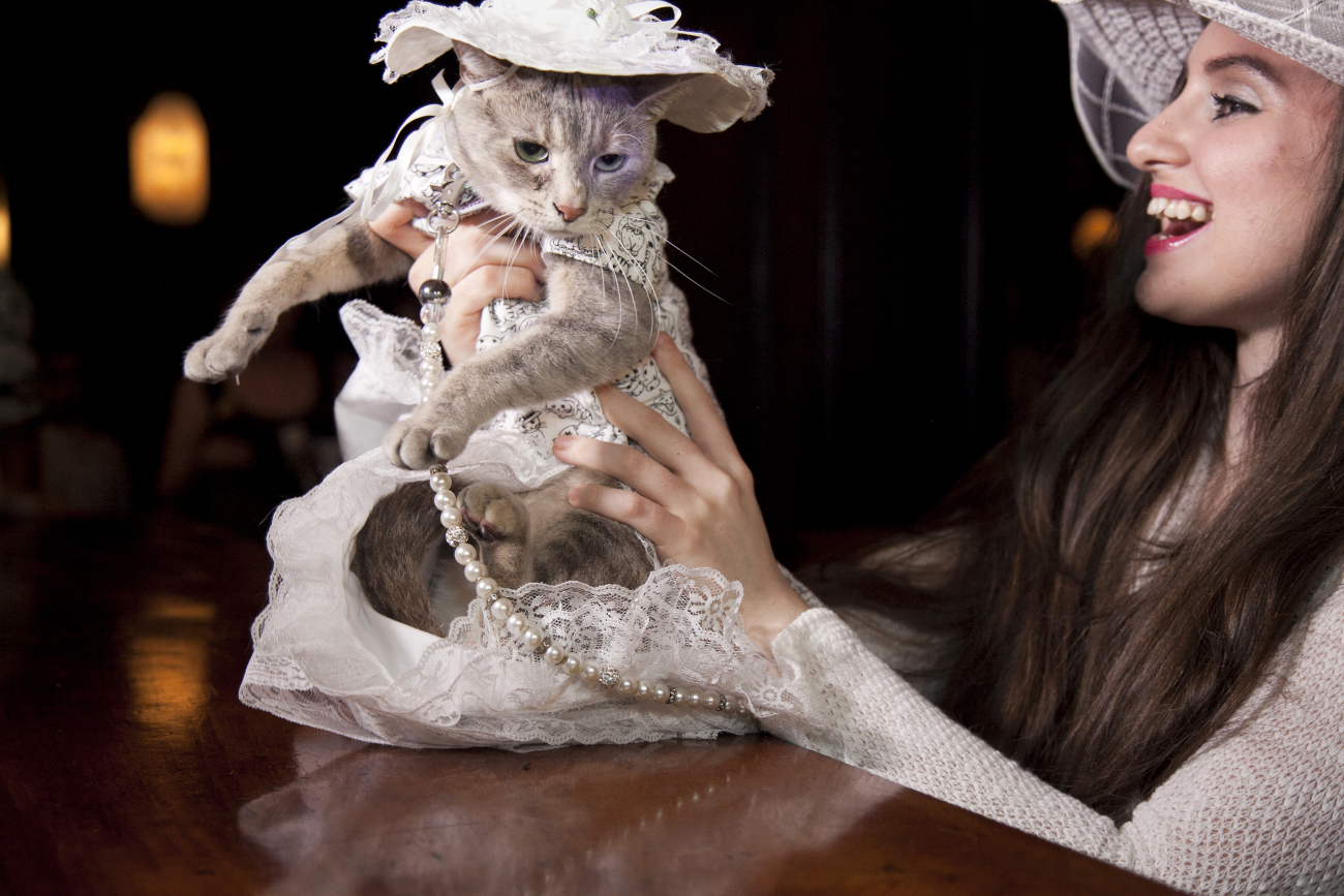 The 10th annual cat fashion show was held at the Algonquin Hotel in New York, honouring its history of Hamlet, a stray cat that wandered into the lobby in 1932, sparking a tradition of always having a hotel cat.
