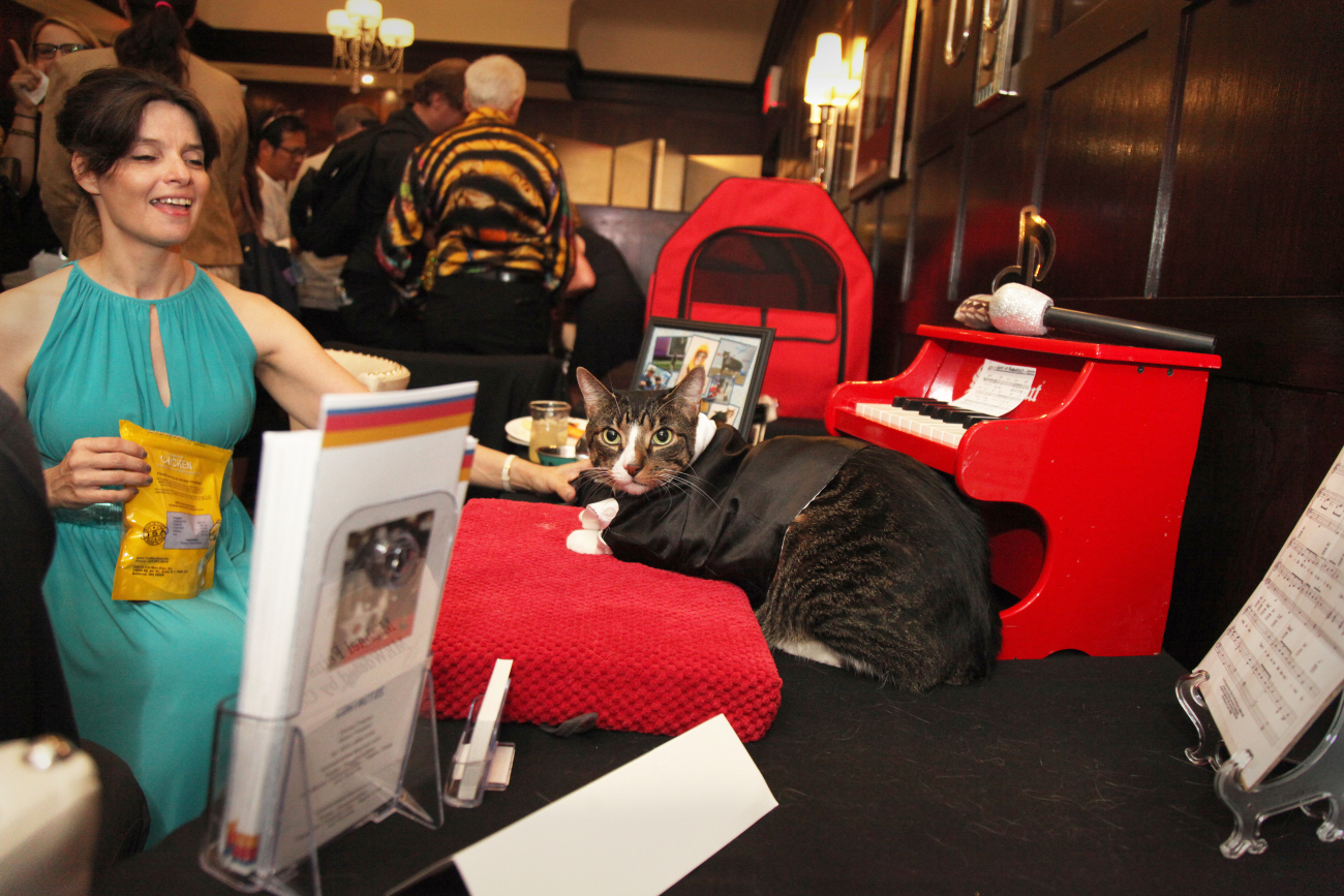 The scene at the Algonquin Hotel Cat Fashion Show 2016.