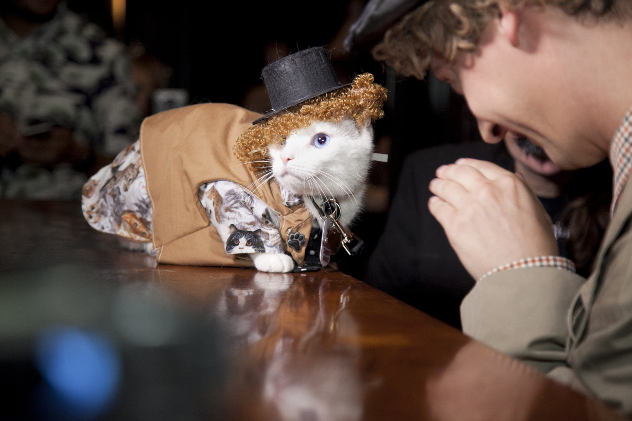 Algonquin Hotel Cat Fashion Show 2016