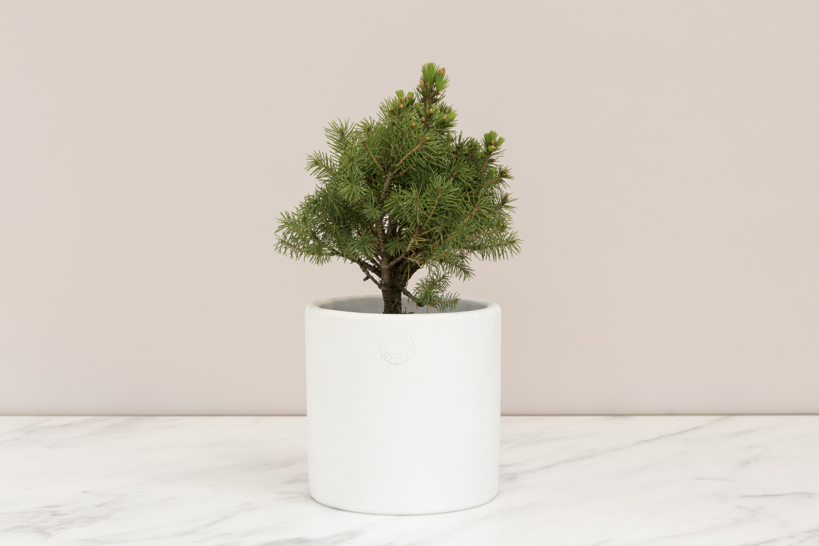 blush-table-christmas-tree