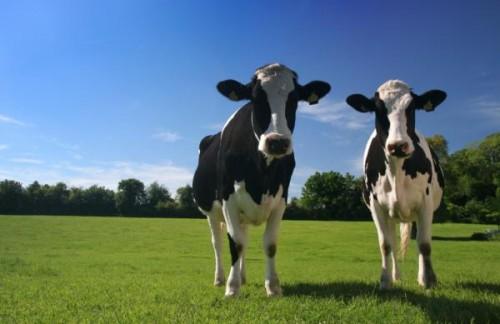 dairy New Zealand