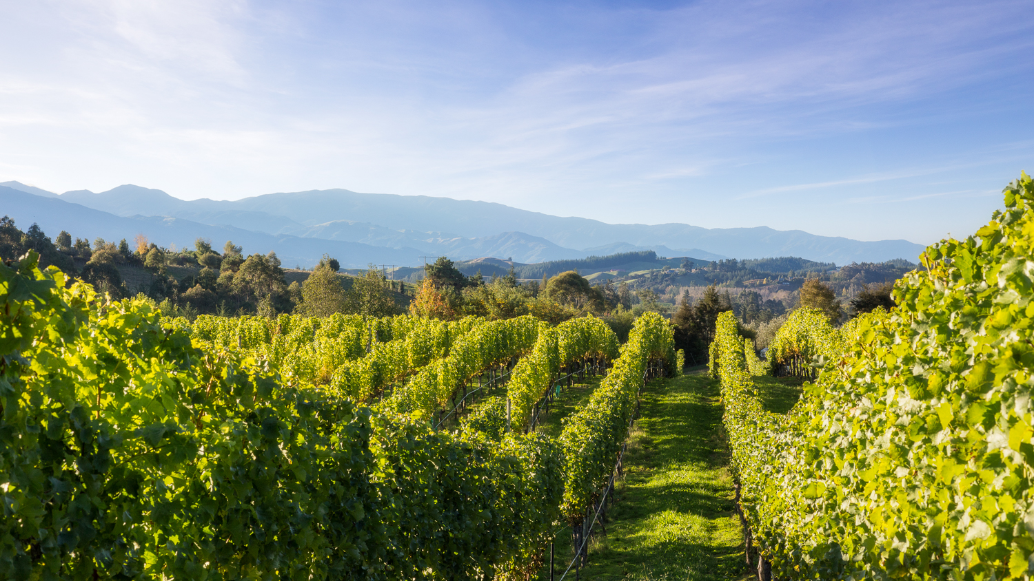 Sustainable wineries